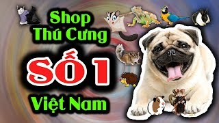 Giới Thiệu Siêu Thị Thú Cưng Nobİpet - Sнop Thú Cưng Số 1 Việt Nam