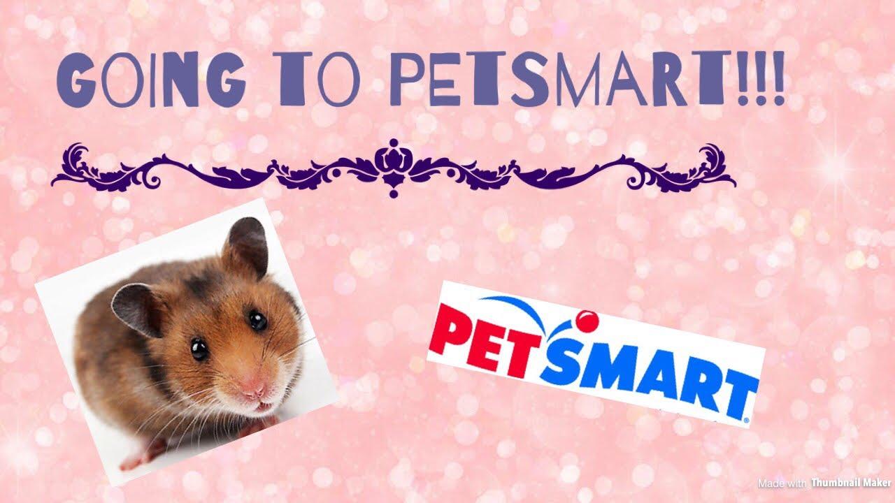 Long Haired Hamster Petsmart 86