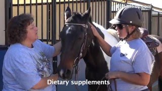 LYDIA HIBY, Animal Communicator:  Minty, the retired polo pony.