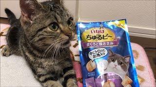 ちゅるビーがウマすぎて一瞬にして食べ尽くしてしまう子猫