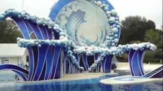 Dolphin Show - Sea World Florida