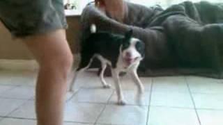 Dogs Trust Newbury: Ziggy