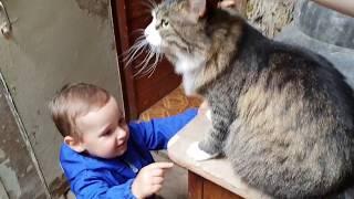 Испытание кота Мурлока новым стрессфактором
