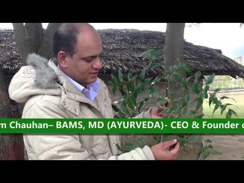 Benefits and Medicinal Properties of Neem - Ayurvedic doctor from Chandigarh