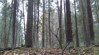 Forest noise