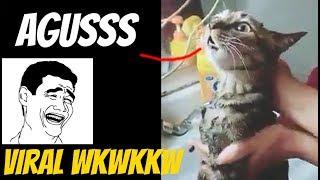 Download Video Viral kucing ngomong 'agusssss' mana nih si agus wkwkkwkw MP3 3GP MP4