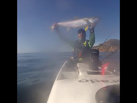 Kayak Fishing Cape Town South Africa - Yellow Tail At Cape Point