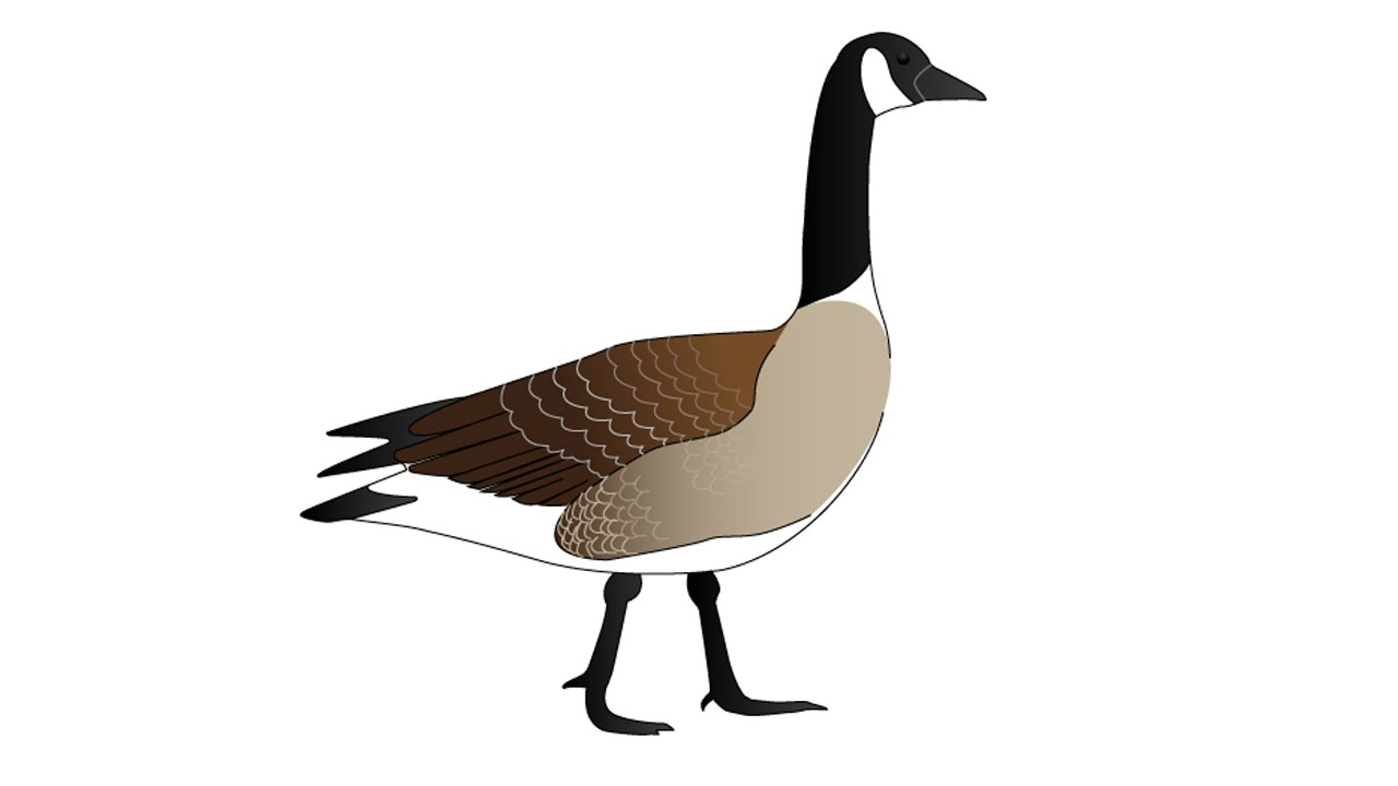 How to Draw a Goose - YouTube