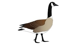 How to Draw a Goose