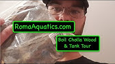 Cholla Wood Shrimp And Plecostomus Tunnels Aquascape Unboxing Youtube