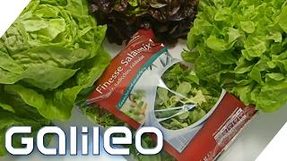 Wie frisch und gesund ist Fertig-Salat?   Galileo Lunch Break
