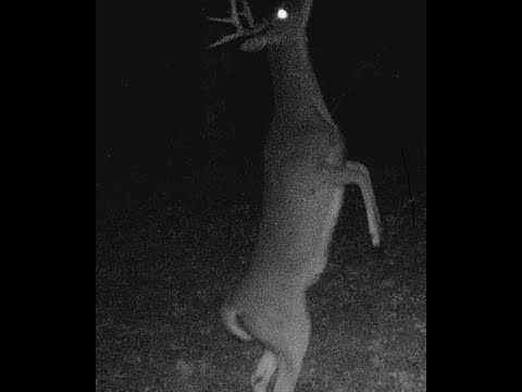 trail cams 2018