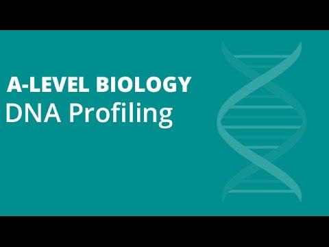 dna profiling fingerprinting a level biology ocr aqa edexcel