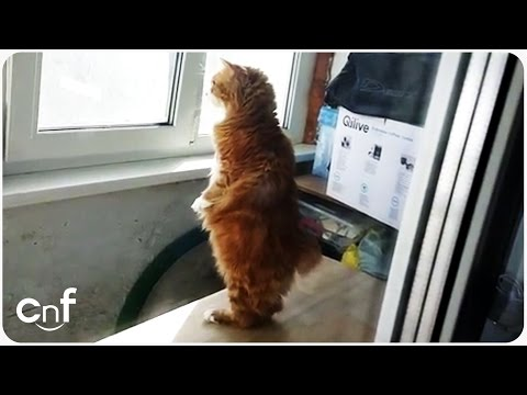 Standing Cat Looks Outside