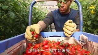 沐光農場的音樂小番茄