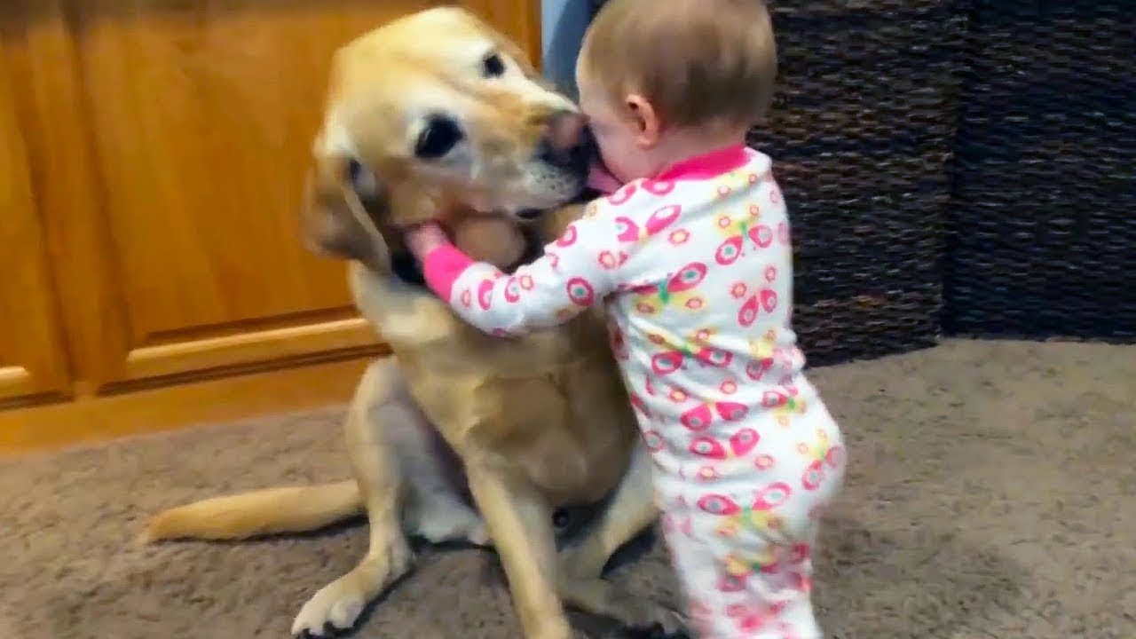 Cute is Not Enough - Funny Cats and Dogs Compilation #166
