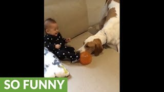 Dog entertains baby during rainy day