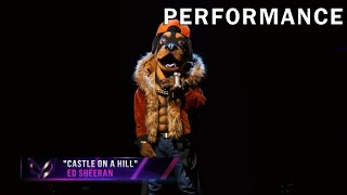 "Rottweiler sings ""Castle On A Hill"" by Ed Sheeran 