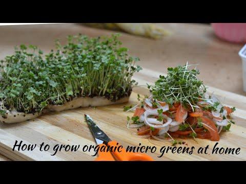 How to grow organic microgreens at home | CHEF MRUGZIEE