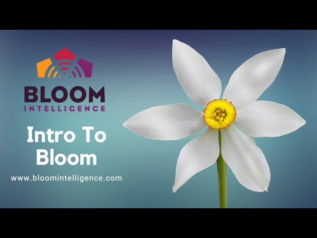 Intro to Bloom Intelligence