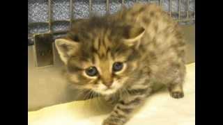 Endangered Cat Born at Audubon