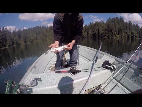 Trolling for Rainbow Trout