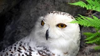 Самые красивые птицы мира.