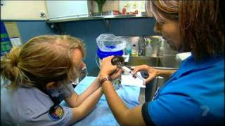 Animal Rescue RSPCA 9.8.2010 part3.ts