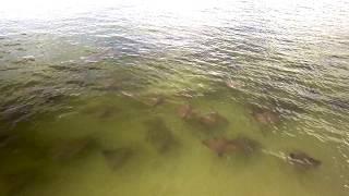 Apollo Beach Fl Sharks