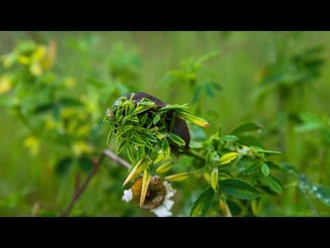Slug eating plant after rain storm angle 1