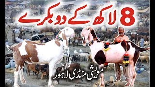 Lahore Bakra Mandi | Most Expensive Heavy Weight Bakra | Episode 6 New Video Urdu/Hindi