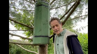 A Wooden Pallet Hive made during lockdown fills with a swarm of bees