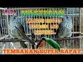 Masteran Burung Siri Siri Super Rapat  Mp3 - Mp4 Download