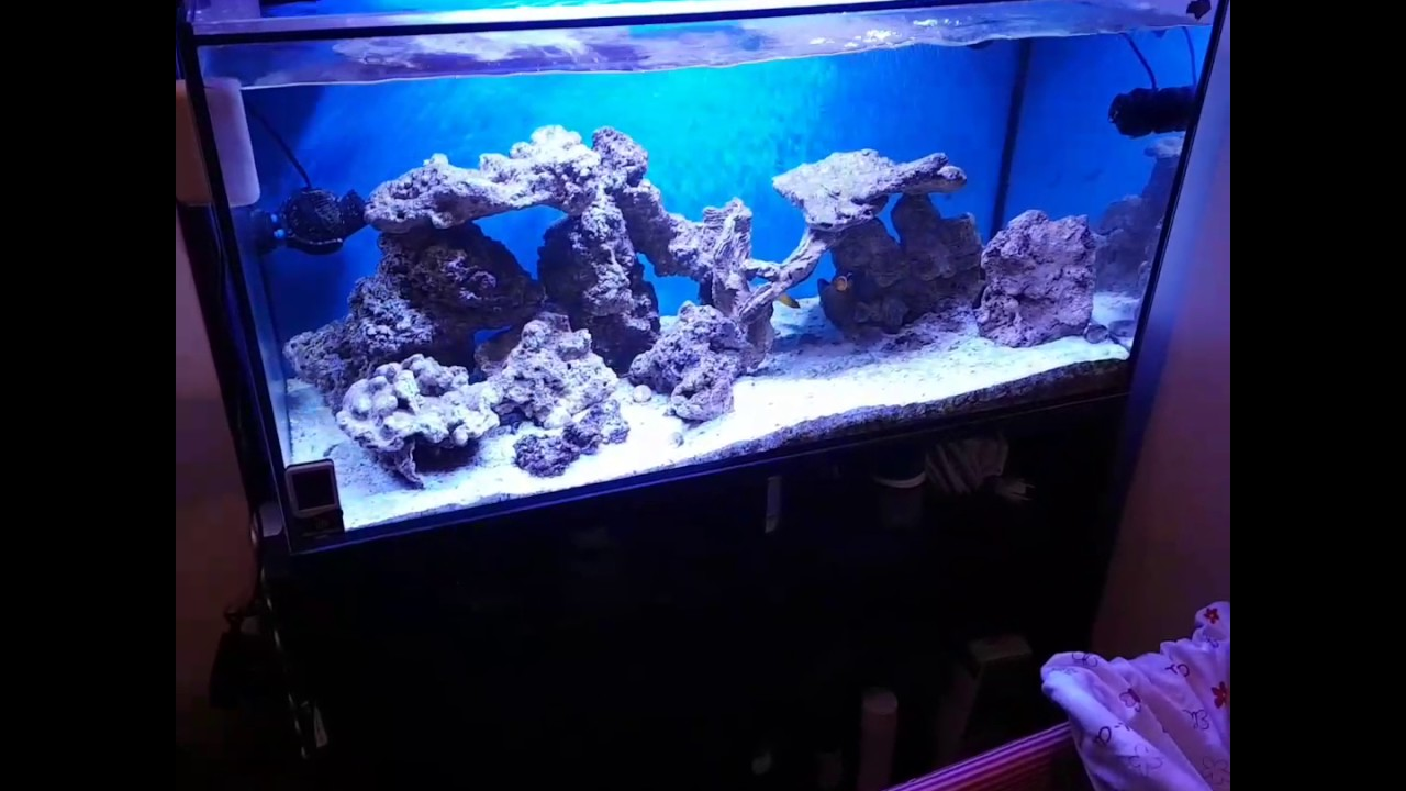 acuario marino 300 litros con sump 100 litros empezando