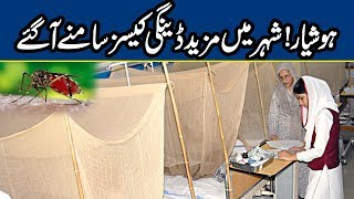 Alert! Dengue Cases on Rise in Lahore | Breaking News | Lahore News HD