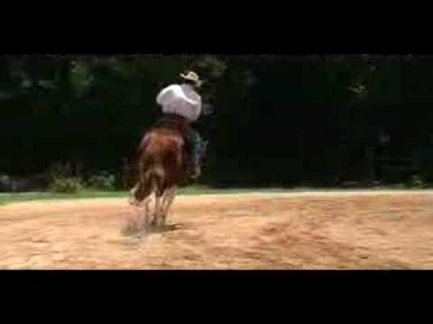SR Broadway Cowboy- 2005 15.3h APHA Gelding For Sa...