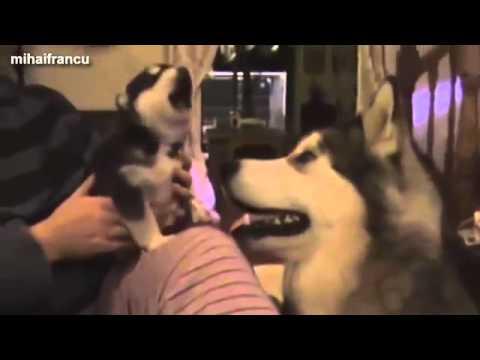 Most Funny Dog Barking Videos Compilation