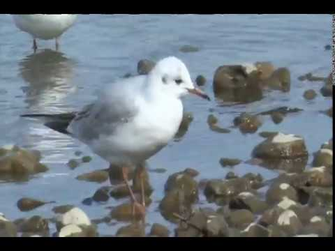 The Birds of Norfolk - Amazing, Beautiful, Breathtaking Natural Wildlife Bird Sanctuary! WATCH!