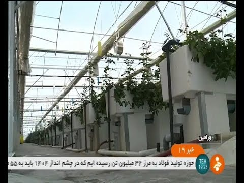 Iran Holland Rose hydroponic greenhouse, Varamin county گلخانه هيدروفونيك رز هلندي ورامين ايران