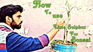 How to Use Lime Sulphur for Bonsai - Hindi