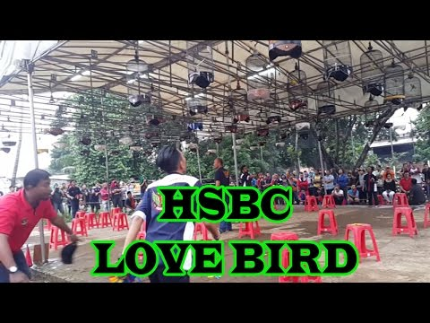 LatBer HSBC Bekasi Barat : Lomba Burung Love Bird