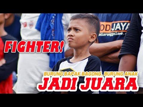 Lomba Burung Sukses Ebod Jaya Cup Jatim 2014 Di Surabaya