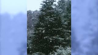 Brian May Winter Wonderland - slo-mo 22/01/2019