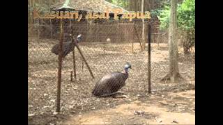 Geo 2010 1001781 Fifi Jenis Fauna Bagian Timur Indonesia