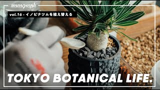 TOKYO BOTANICAL LIFE - vol.16 イノピナツムを3Dプリント鉢に植える / パキプスの剪定 / 実生と胴切りの経過報告
