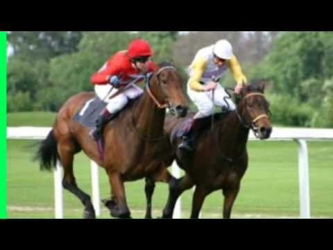 horse betting travel free horse racing tips australian