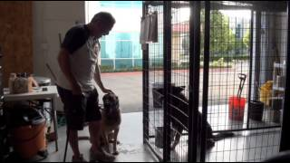 Kennel Training Video - Falco K9 Academy