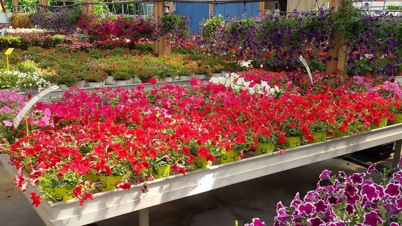 Balcone fiorito tutto l anno elegant piante da balcone for Giardini fioriti tutto l anno