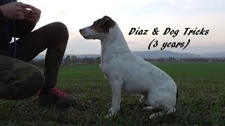 Dog tricks by Diaz the Parson Russell terrier (3 years)