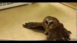 OWL vs BLOWER
